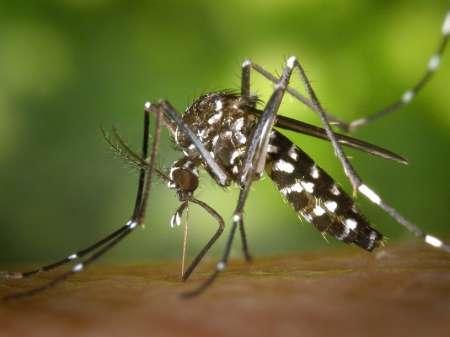 В Турции появились комары-переносчики лихорадки Зика