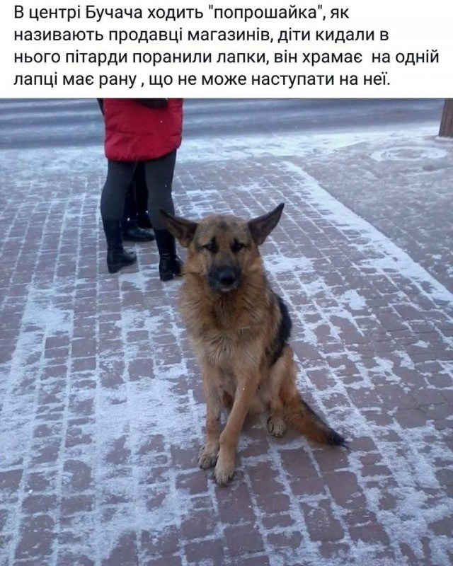 На Тернопільщині заради розваг діти покалічили собаку (фото)