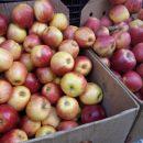 Ціни на ринку: за болгарський перець доведеться віддати майже сотню (фото)
