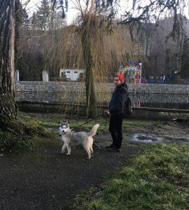 Дорогого собаку вкрали з подвір'я господарів (фото)