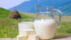 На Тернопільщині ще один рекорд: цього разу з надоями молока