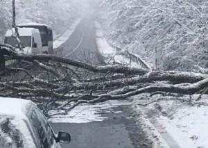 У Тернополі через негоду обвалилося дерево