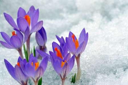 Когда наступит весна в 2018 году в России