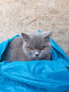 Кошеня, яке у пакеті викинули на смітник, знайшло нову сім'ю (фото)