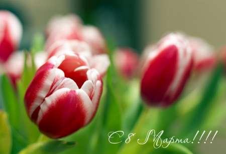 Короткие и красивые смс-поздравления с 8 марта: поздравить с праздником