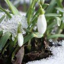 Когда наступит весна 2018 в России: прогноз синоптиков