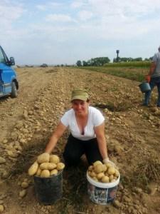 Відома тернопільська співачка продає елітну картоплю (фото)