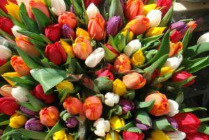 Тернополянка хотіла купити квіти, а стала жертвою шахраїв