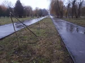 У Тернополі вандали знищили найдовшу катальпову алею в Україні