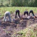 На Тернопільщині картопляні вихідні