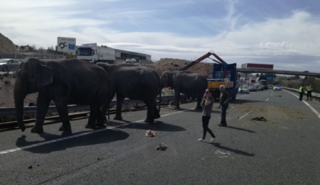 В Испании грузовик с цирковыми слонами попал в ДТП. ФОТО, ВИДЕО