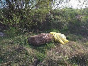 На Збаражчині викинули мертві свині на узбіччя дороги