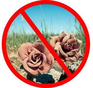 Церква і комунальники просять не нести на кладовища штучні квіти