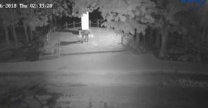 У Тернополі вандали нанесли шкоду пам'ятнику жертвам Голокосту (ВІДЕО)