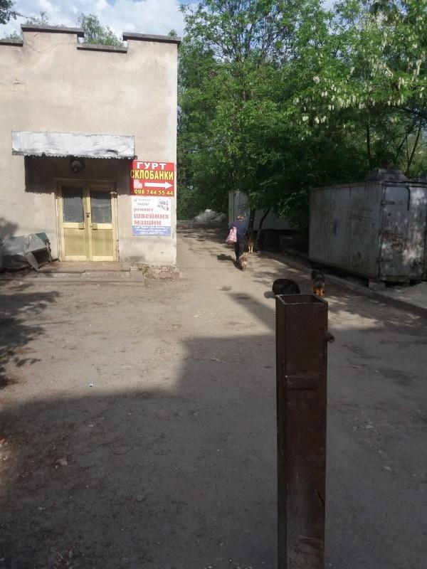 У Тернополі собаки розірвали старенькій бабусі руку (ФОТО)