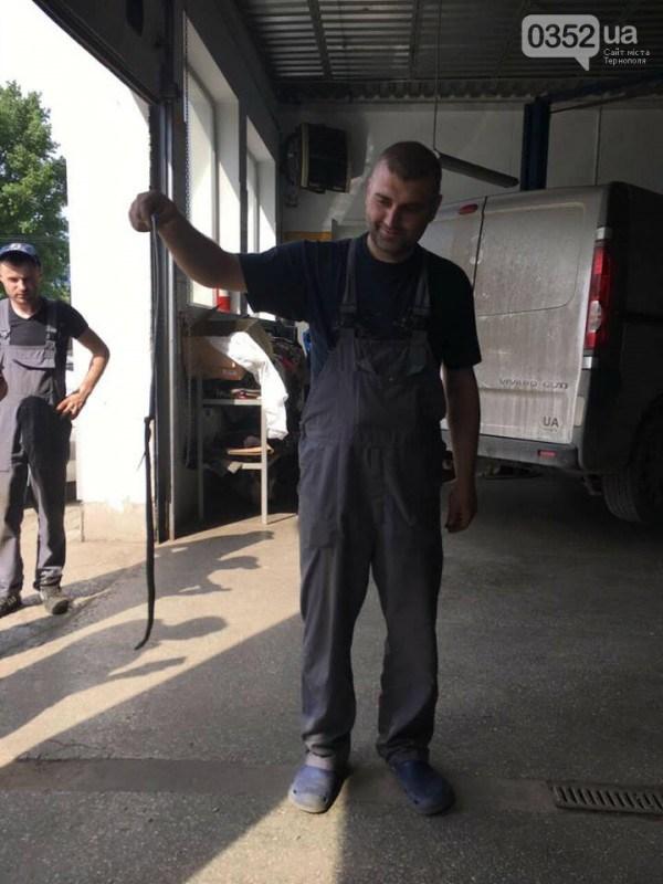 У Тернополі на СТО привезли автомобіль із змією (ФОТО, ВІДЕО)