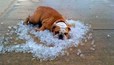 Как избежать перегрева в жаркие дни: Роспотребнадзор опубликовал рекомендации