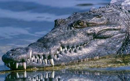 В США аллигатор утащил под воду мальчика: ребенка ищут спасатели
