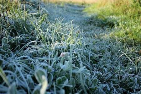 Прогноз погоды в Московской области: Синоптики пообещали заморозки в Подмосковье в конце недели