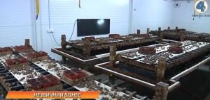 Тернополянин вирощує равликів на експорт