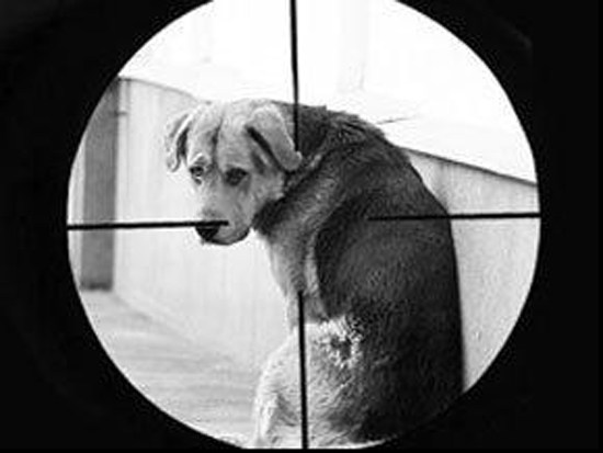 У Тернополі з вікна стріляли по собаках і прибиральниці (ВІДЕО)