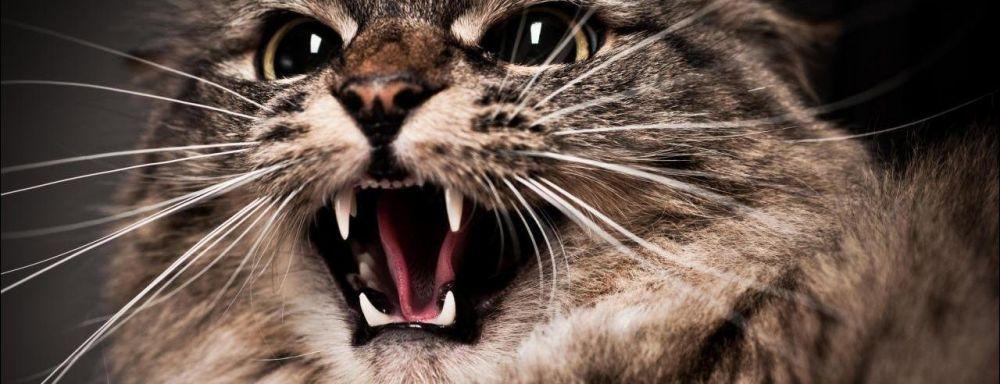 """На Тернопільщині кіт """"відправив"""" жінку у лікарню"""