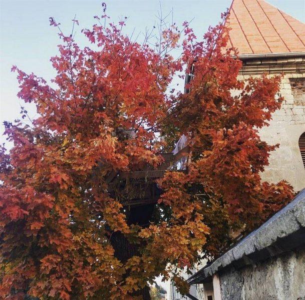 """На Тернопільщині безхатченки облаштували собі """"гніздо"""" на дереві (ФОТО)"""