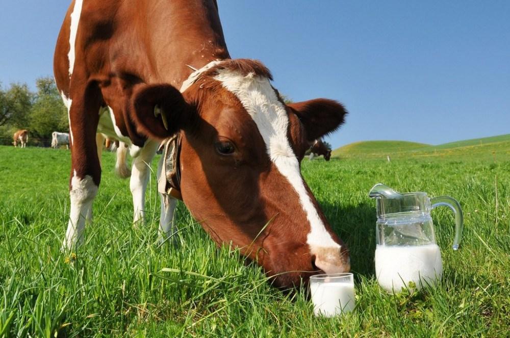 Злодій з Житомирщини крав корови на Тернопільщині