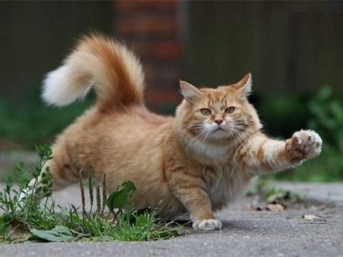 На Тернопільщині у вбитого кота виявили сказ. Оголосили карантин
