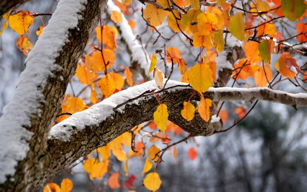 Погода на вихідні: в Україні збережеться суха погода, вночі очікується до 4 градусів морозу