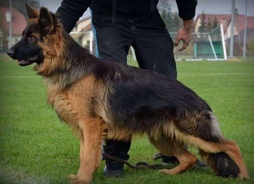 На Тернопільщині собака знайшов 14-річного злодія