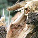 На Тернопільщині у лісі травмувався 18 річний юнак