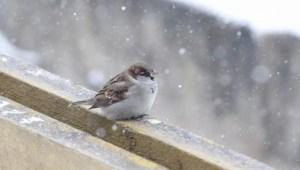 Тернополян очікує циклон та похолодання