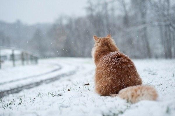 І сніг, і мороз, – у вихідні на Тернопільщині передбачають холоднечу