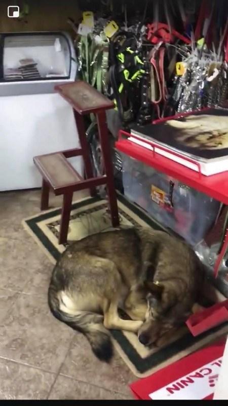 У Тернополі безпритульні собаки мають де грітись
