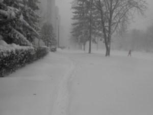 Тернопіль замітає снігом
