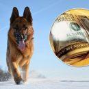 Пес з прогулянки приніс господарям 7000 доларів
