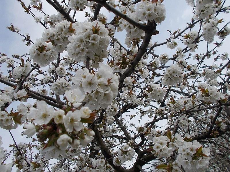 Весна на Тернопільщині розпочнеться з похолодання