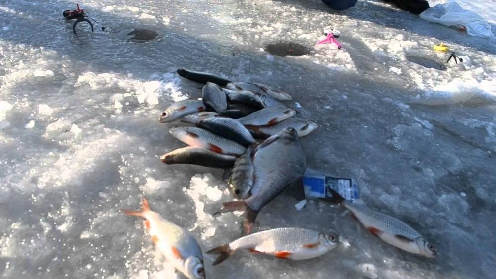 У Тернополі на ставі масово штрафують рибалок