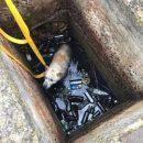 У Тернополі пес впав у двометровий колодязь (ФОТО)