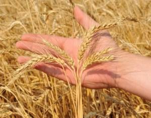 Тернопільські аграрії виробили продукції на 10 мільярдів гривень