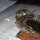 Тварини горять просто живцем: показали наслідки спалення сухої трави (ФОТО)