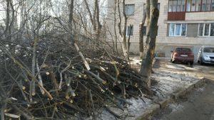 У Тернополі проводять санітарну обрізку дерев