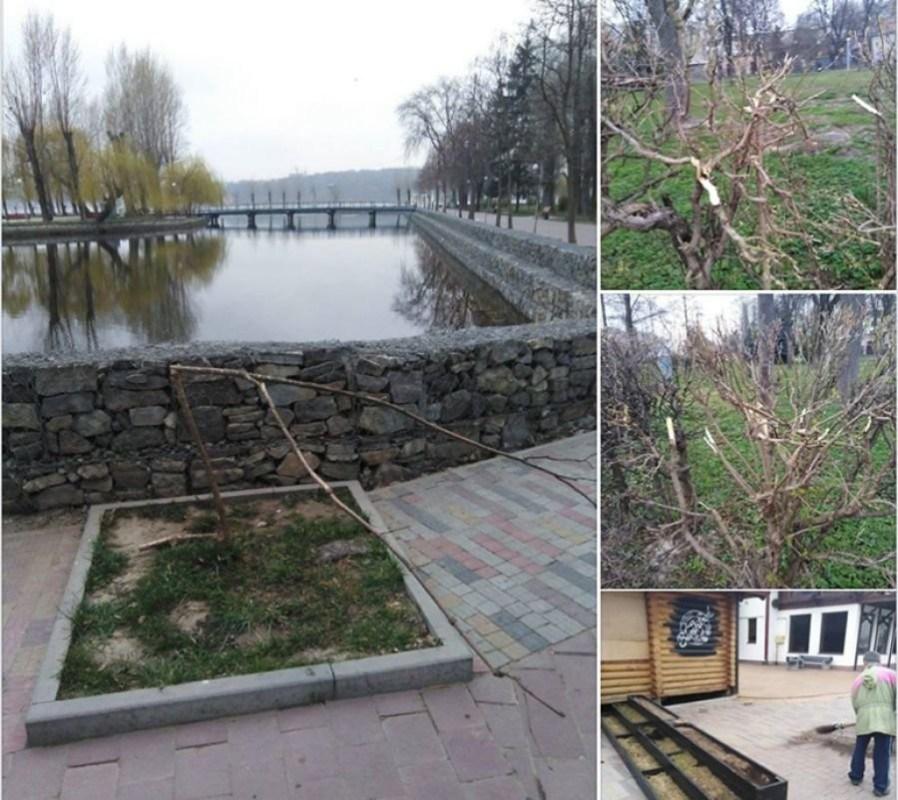 У Тернополі вандали поламали дерева у парку (ФОТО)