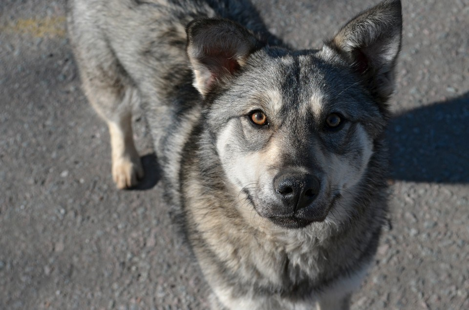 У тернопільському парку жорстоко розправилися із собакою (ОБЕРЕЖНО, ШОКУЮЧЕ ФОТО)