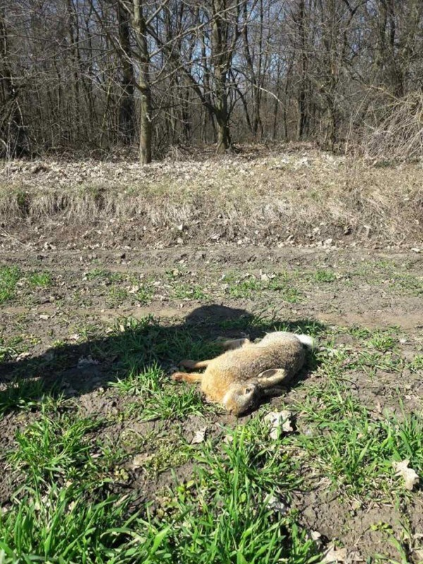 Біля Тернополя загинуло багато диких тварин і птахів (ВІДЕО)