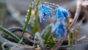 На найближчі дні прогнозують заморозки