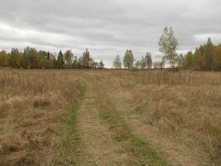 Нещастя на Тернопільщині: у полі знайшли мертву бабусю