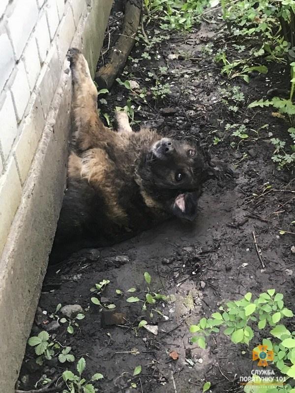 У Тернополі собачка застряг під стіною будівлі (ФОТО)