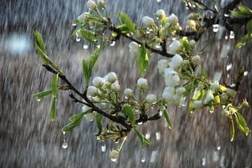 """""""Гарного врожаю не буде"""": синоптик озвучив невтішний прогноз погоди"""